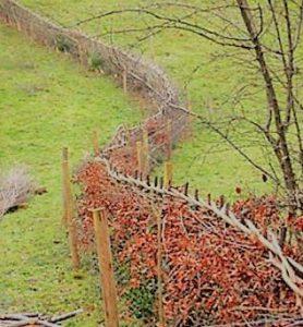 Tuin of tuun zoals gebruik was in de vroegste agri-cultuur